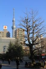 Tokyo SkyTree & tree....