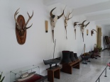 """Hunting """"trophies"""" in the palace"""